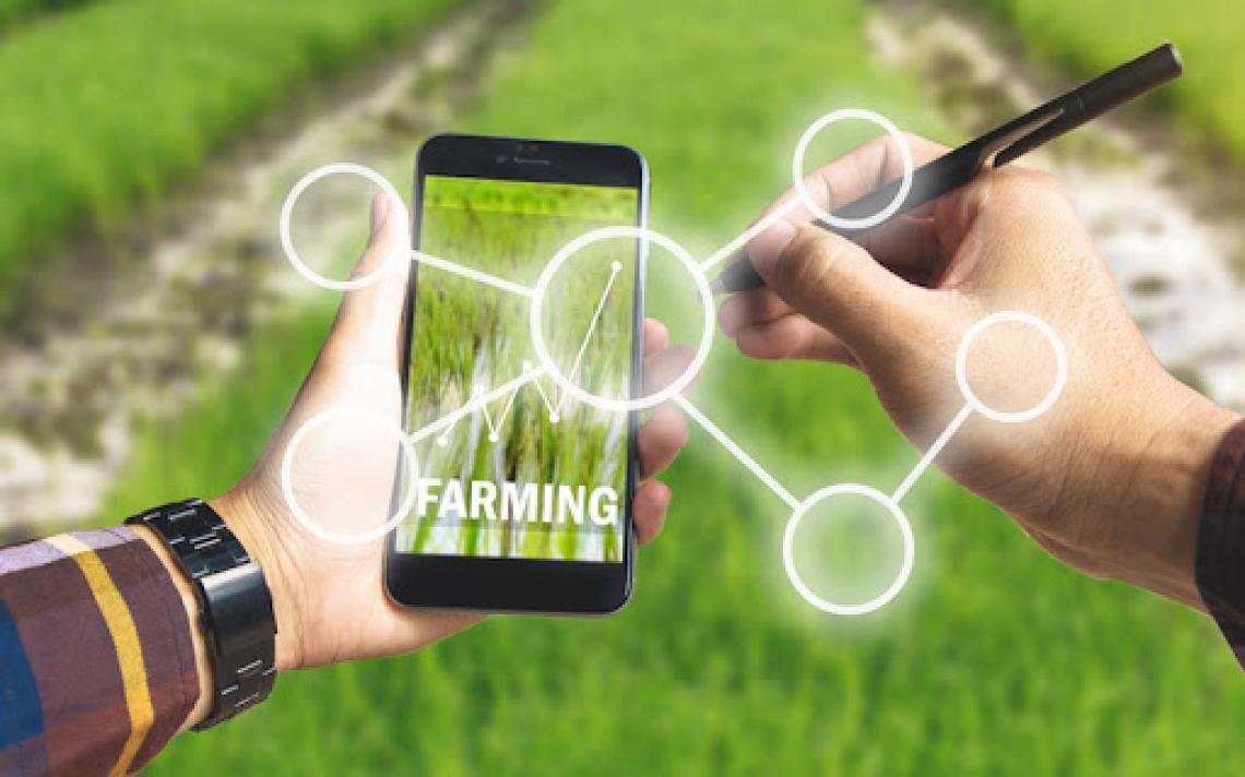 L'agroalimentare italiano digitale vale 450 milioni di euro
