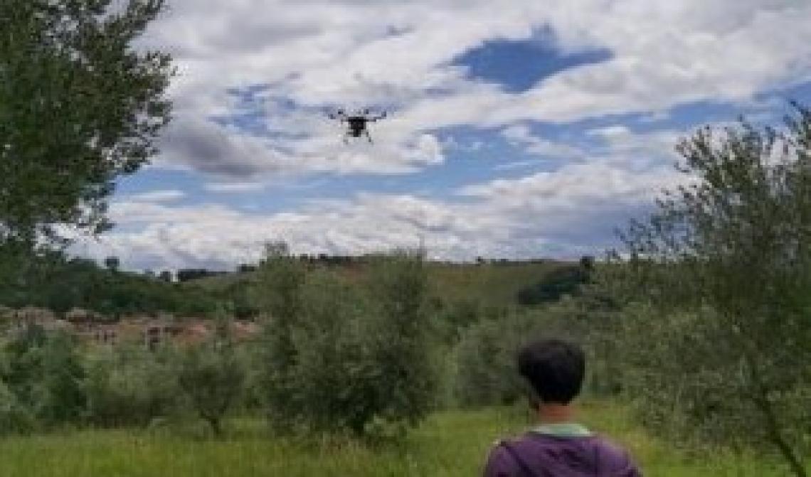 In arrivo anche i droni per combattere la mosca delle olive