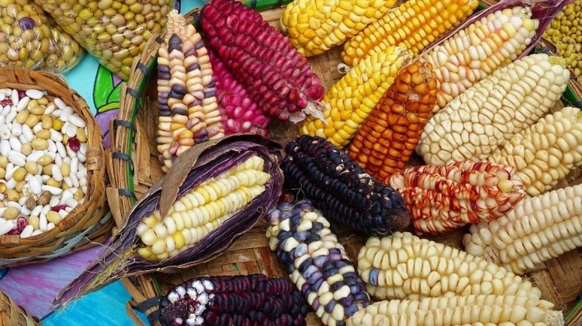 Il Covid-19 alimenterà l'incertezza sui mercati agroalimentari mondiali