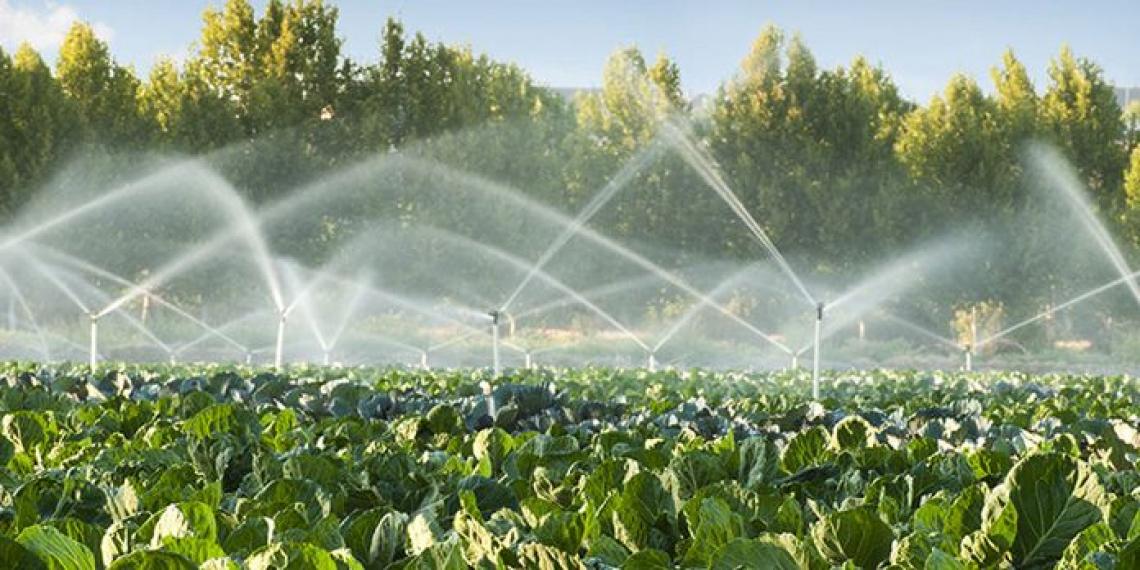 La Corte dei conti europea esamina la sostenibilità dell'uso dell'acqua in agricoltura