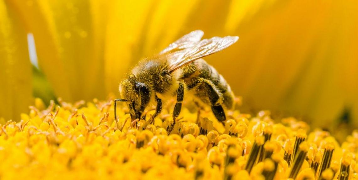 Obiettivo un milione di firme per un'agricoltura favorevole alle api e all'ambiente