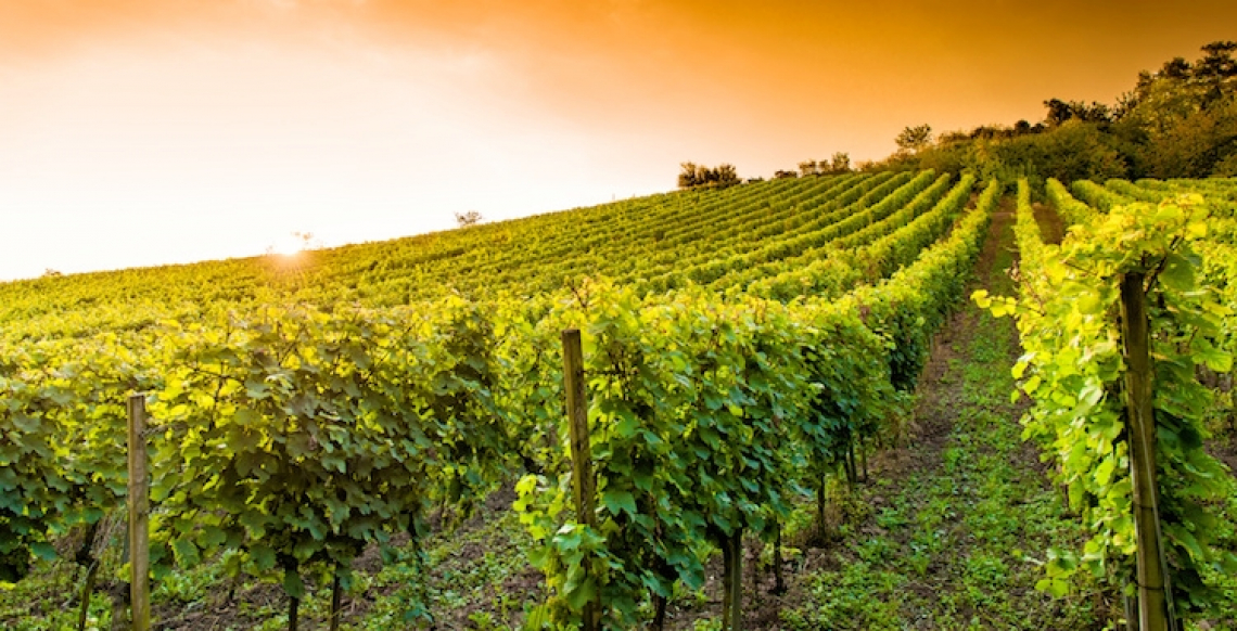 Nasce la capitale italiana del vino, per mettere al centro una città e il suo territorio vitivinicolo