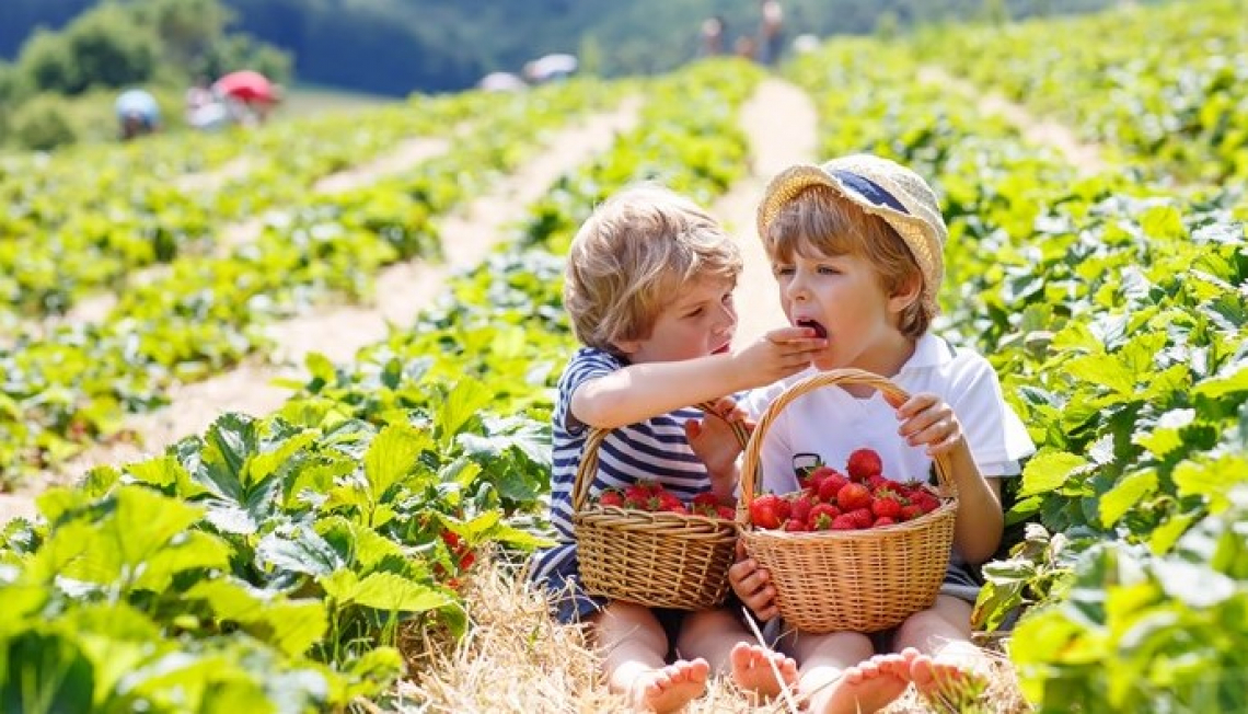 Per l'agricoltura europea  un impegno contro i cambiamenti climatici