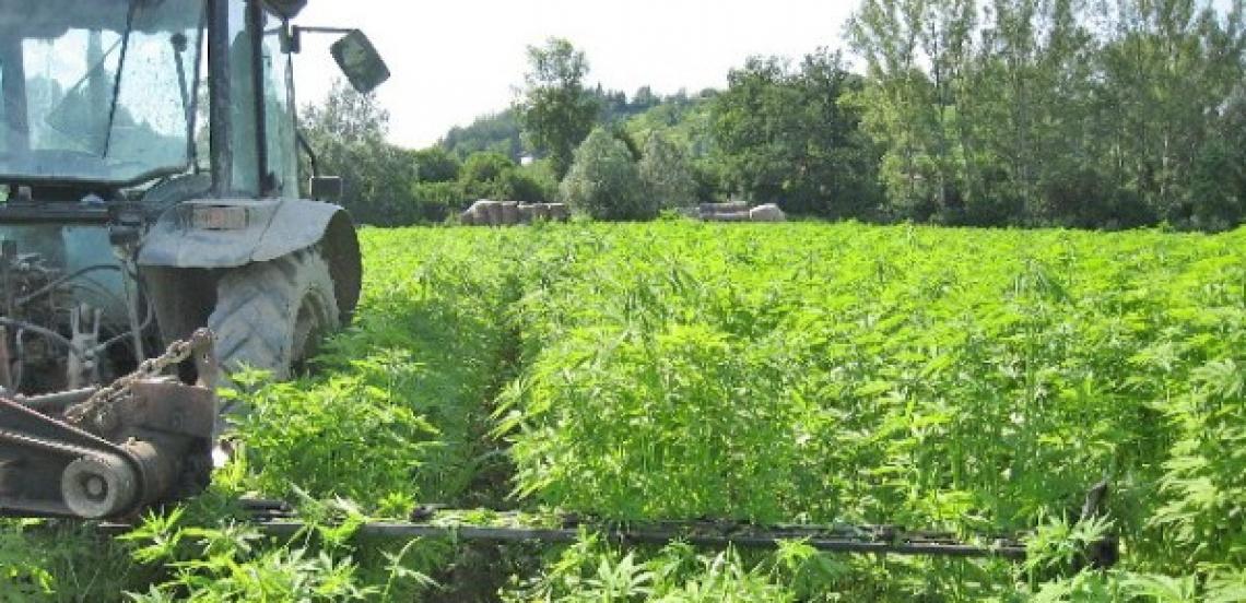 Le colture oleaginose sono fondamentali per il futuro della bioeconomia