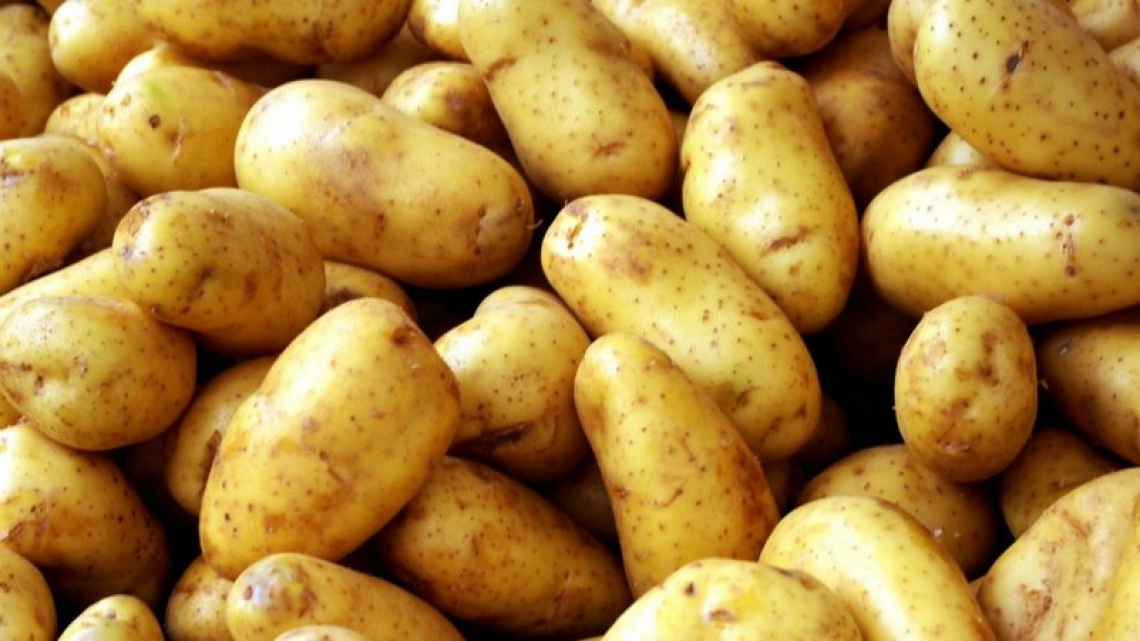 Ridurre il rischio di intossicazione da glicoalcaloidi nelle patate