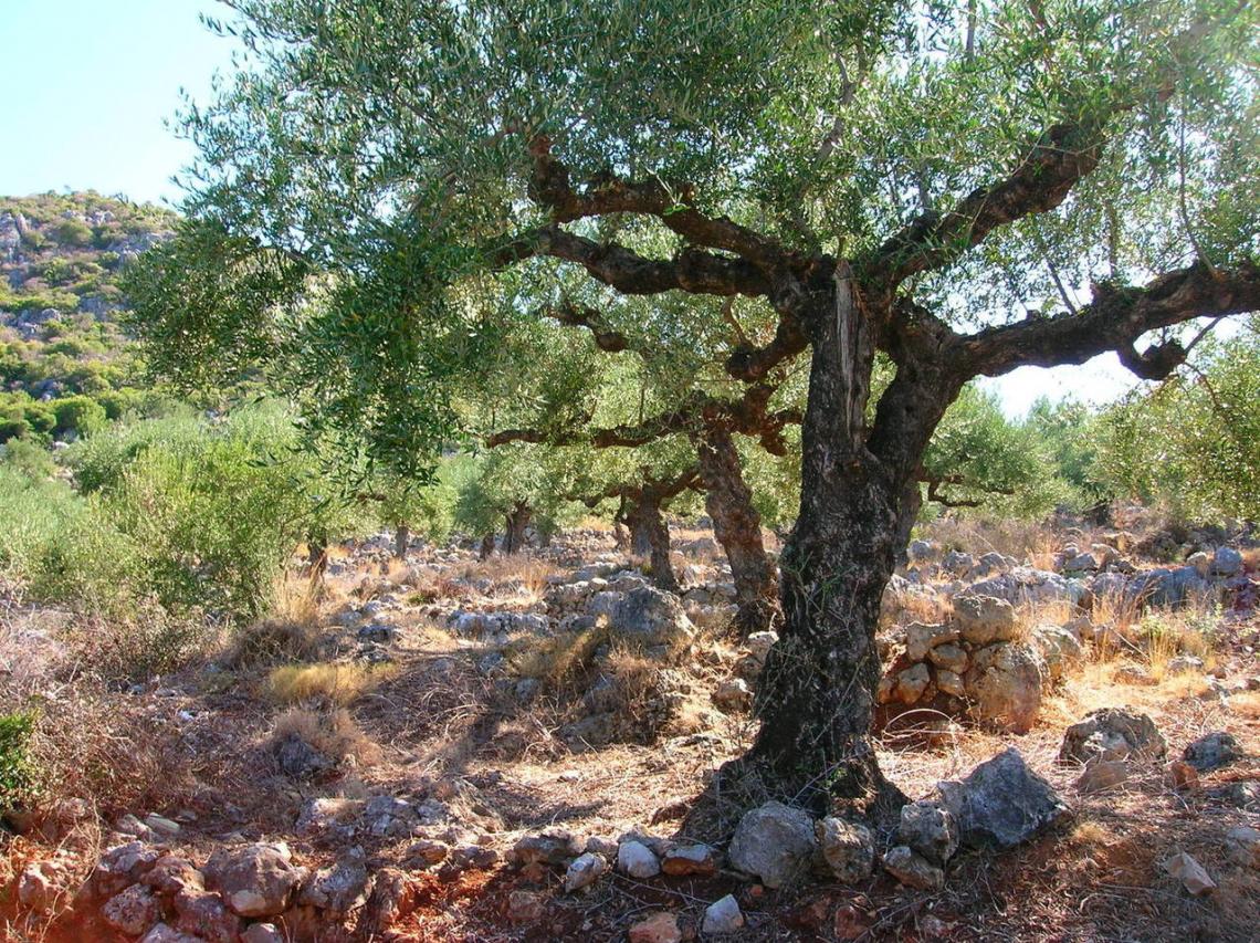 I veri prezzi dell'olio d'oliva tunisino esportato nel 2020