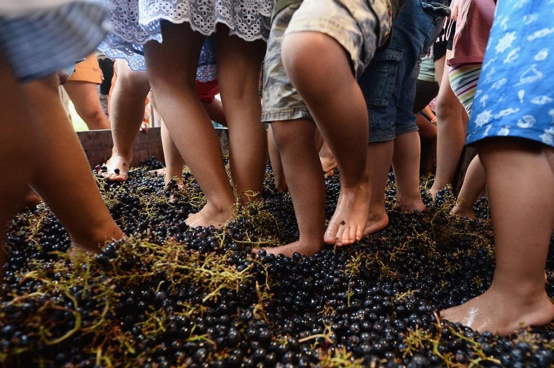 Fico Eataly World dedica settembre a celebrare vite e vino
