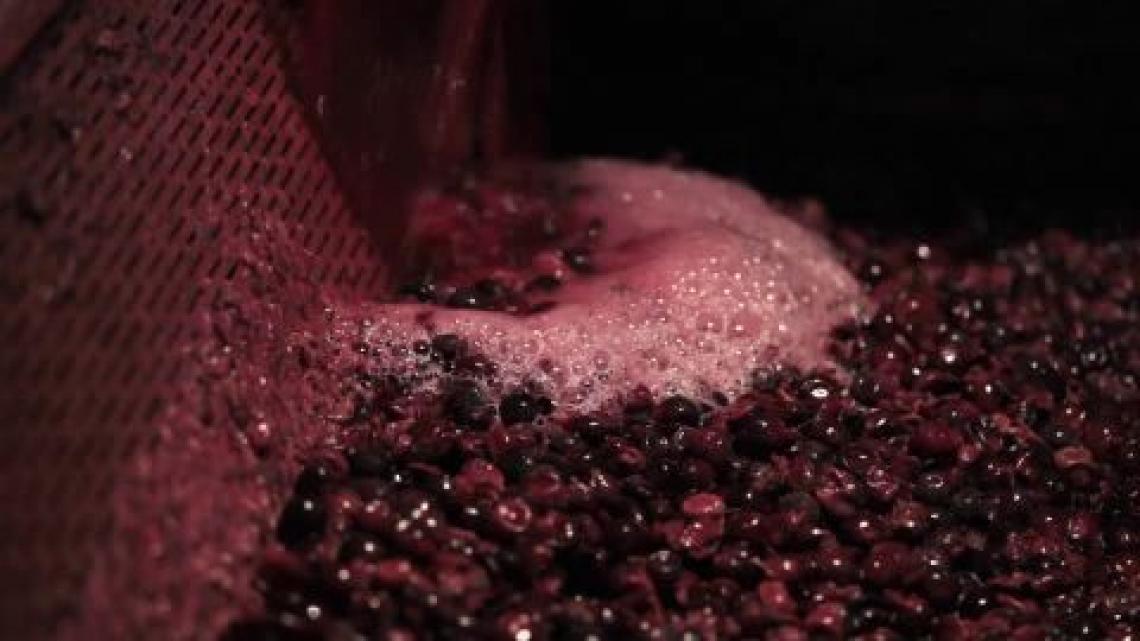 Meglio acini d'uva piccoli o grandi per un grande vino rosso?