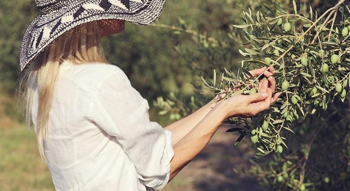 L'oleoturismo è la buona notizia dell'estate 2020: l'oliva matura va colta