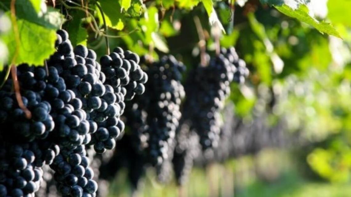 Le organizzazioni della filiera vitivinicola applaudono il Dl Semplificazioni