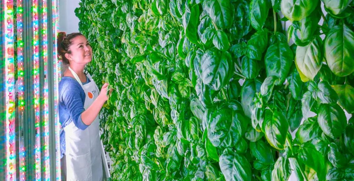 Dagli orti urbani all'agricoltura tecnologica  sostenibile di città