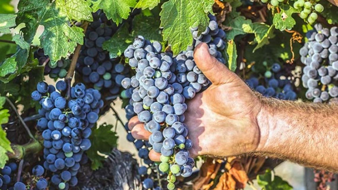 Il trattamento a micronde per accelerare l'affinamento del vino rosso