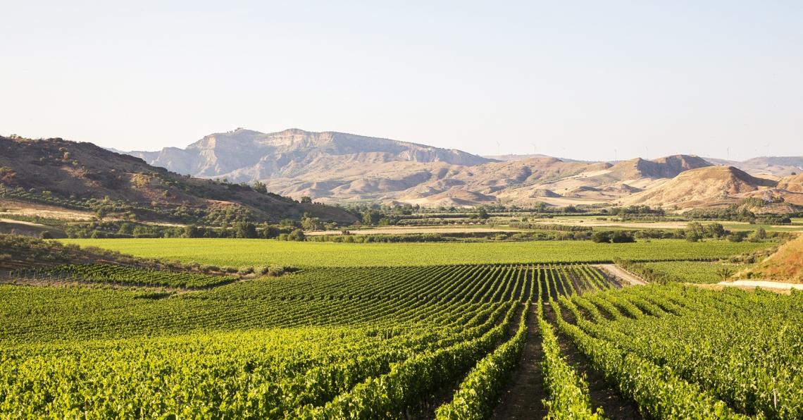 Una vendemmia positiva per la Sicilia vitivinicola: Grillo e Nero d'Avola eccellenti