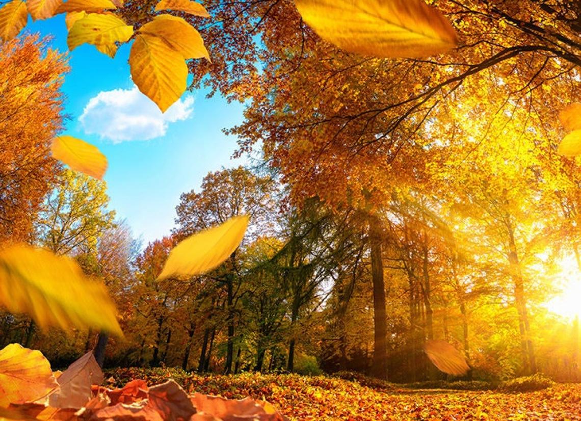 Il Giardino Botanico di Oropa celebra l'autunno ed i suoi colori