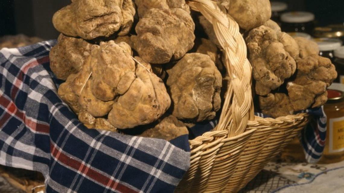 Fiera del Tartufo d'Asti è mostra mercato nazionale