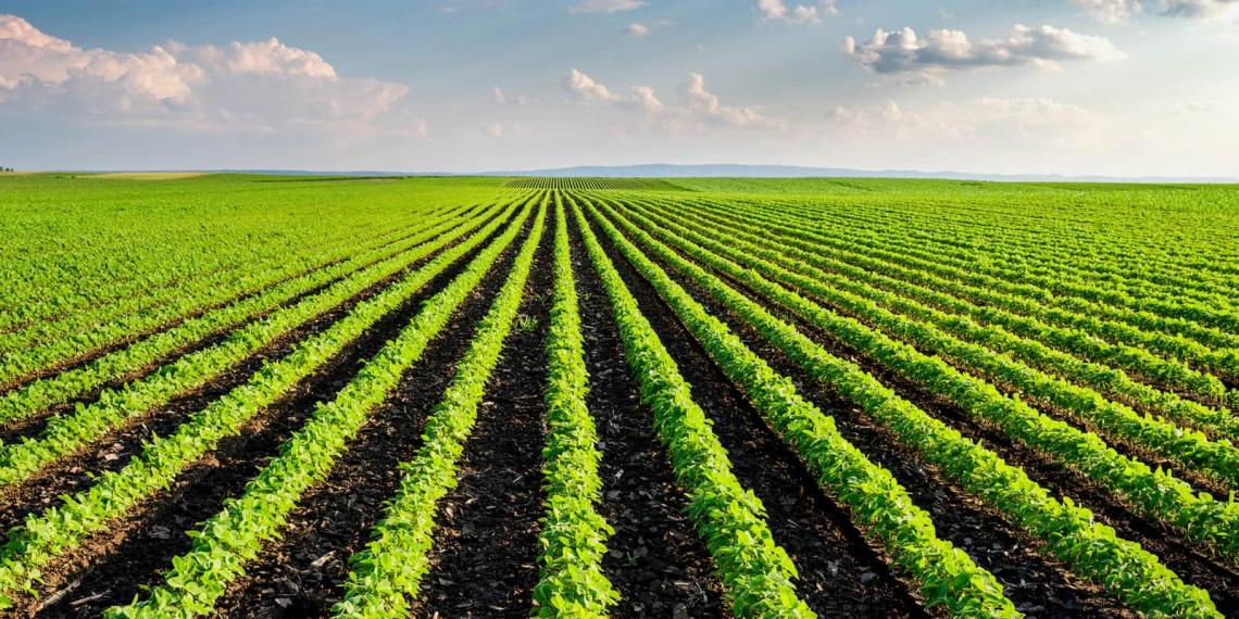 Unire tradizioni rurali e ingegneria genomica per l'agricoltura sostenibile del futuro