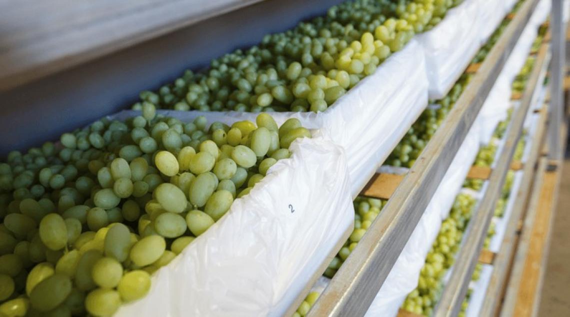 Un'analisi ragionata delle tecniche post raccolta per migliorare le caratteristiche del vino