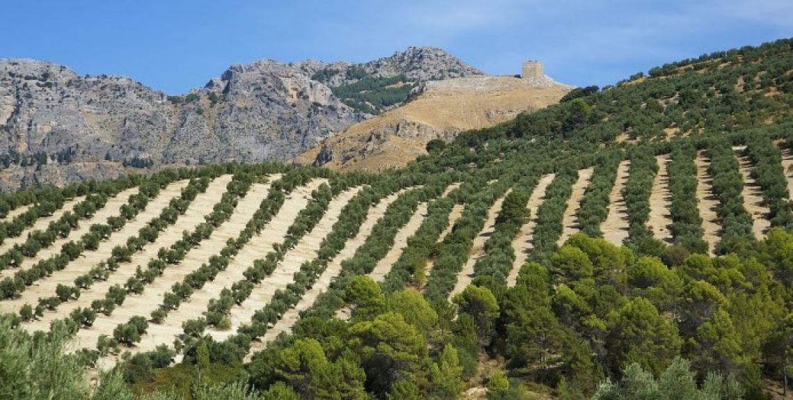 Un tunnel criogenico per raffreddare le olive all'arrivo in frantoio