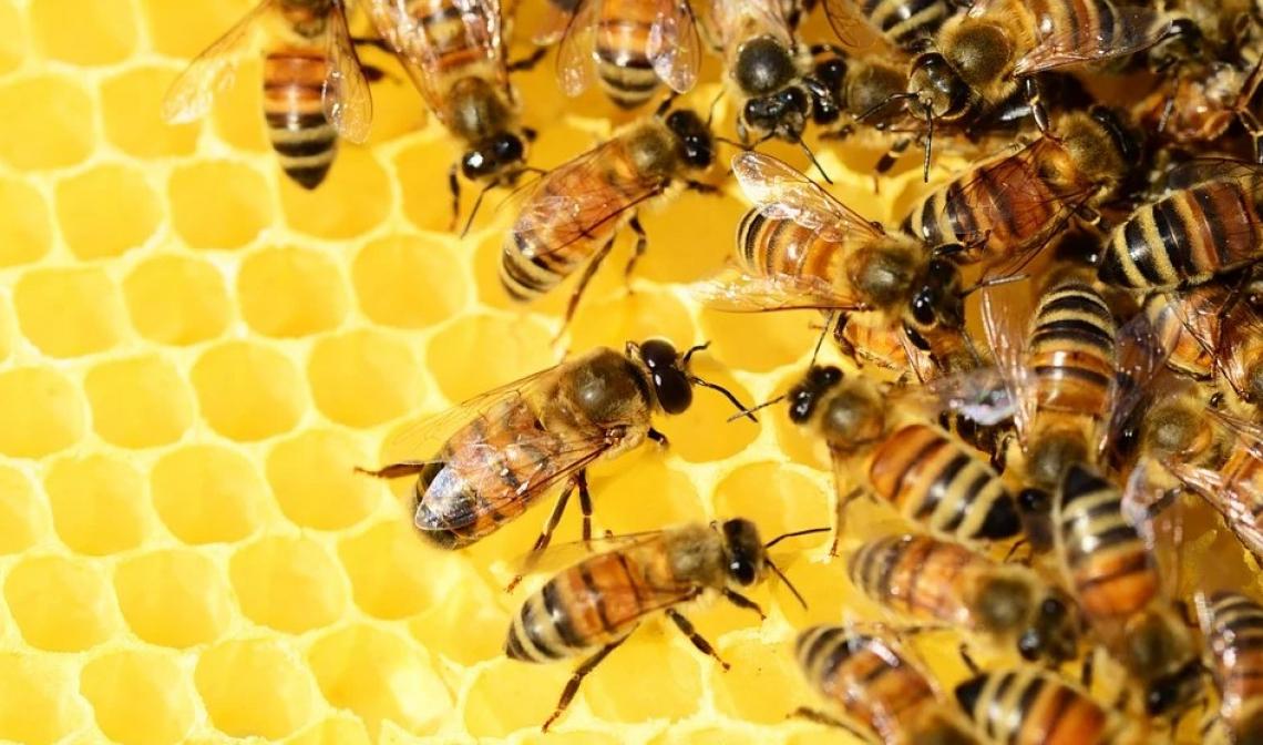 Obbligatorio censire apiari, alveari e sciami apicoli posseduti