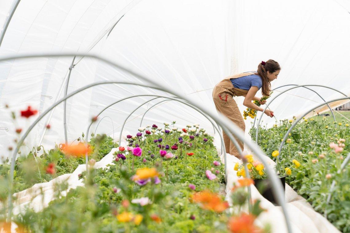 Lo scenario e le prospettive per l'agricoltura biologica italiana