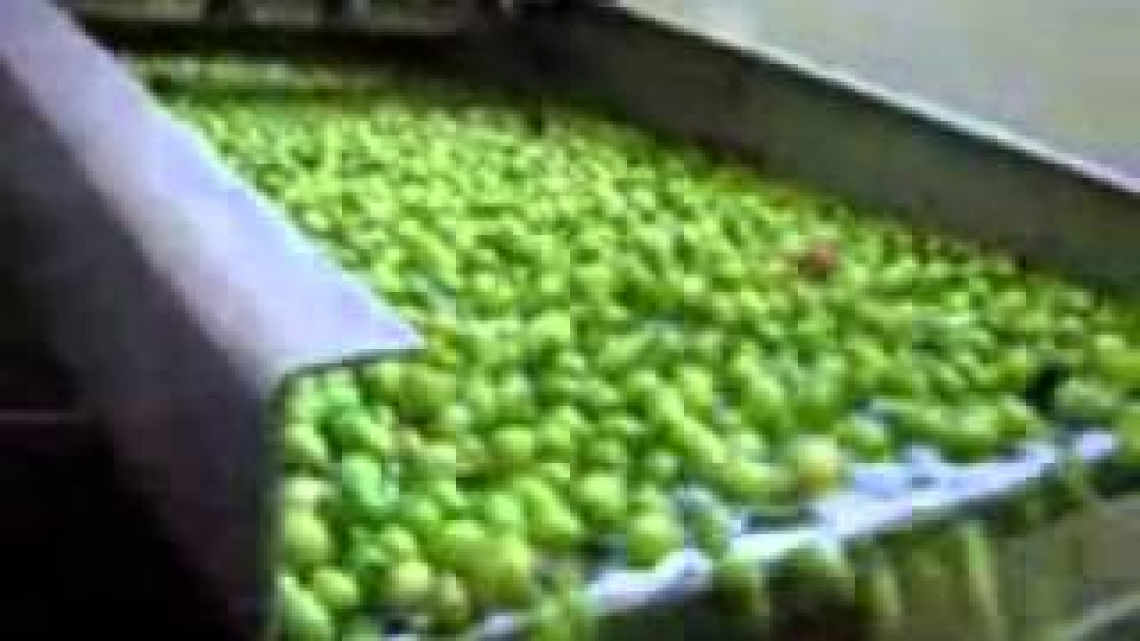 Troppo olio d'oliva italiano rimane nelle cisterne: serve il bando Agea