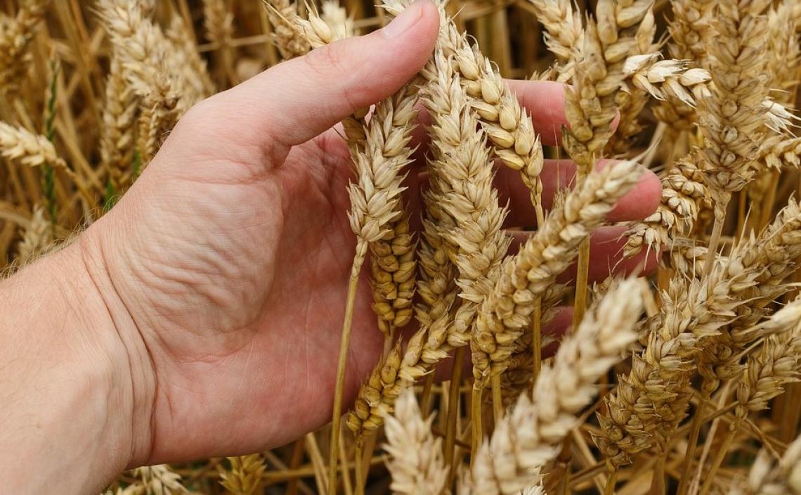 Gli agronomi scendono in campo contro Agea: pronti ad azioni legali