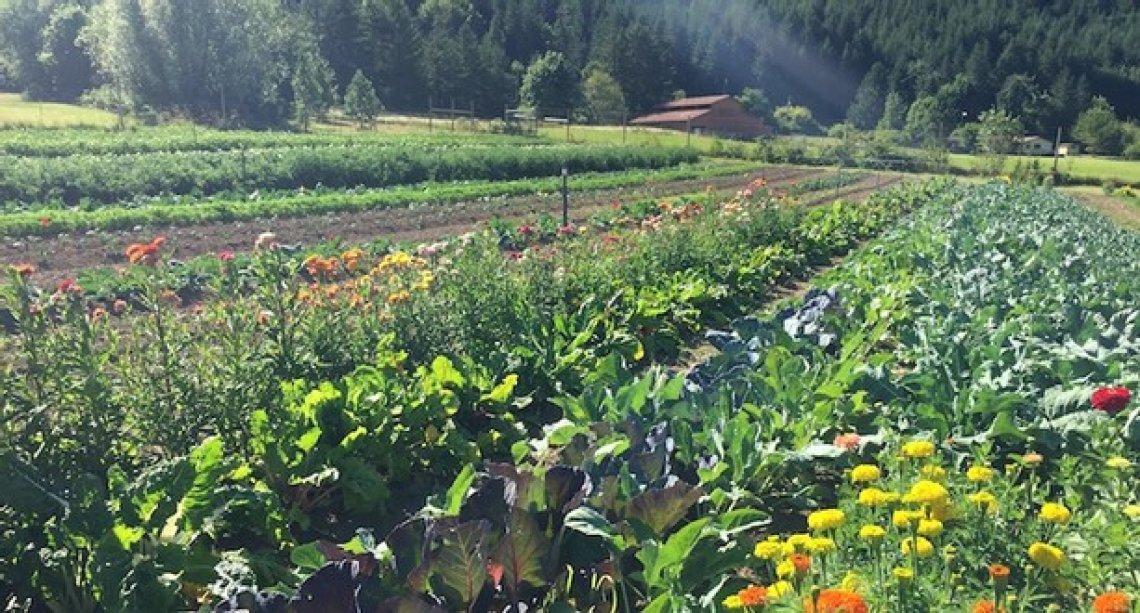 Da Firenze lo sguardo al futuro dell'agricoltura biodinamica