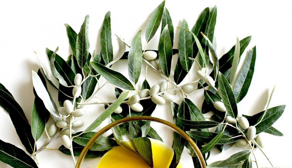 Il 26 novembre l'olivo sia universalmente riconosciuto come protettore del pianeta