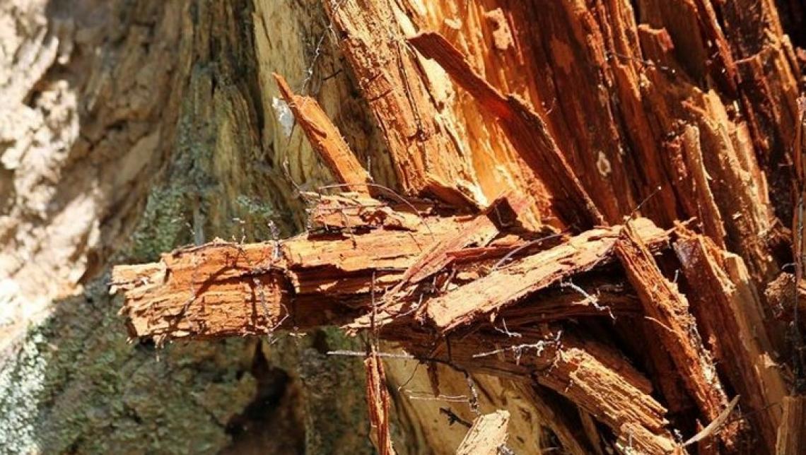 Le nanoparticelle potrebbero essere una cura per il cancro del legno