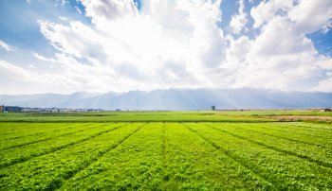 Frenano i prezzi dei terreni agricoli, specie al nord