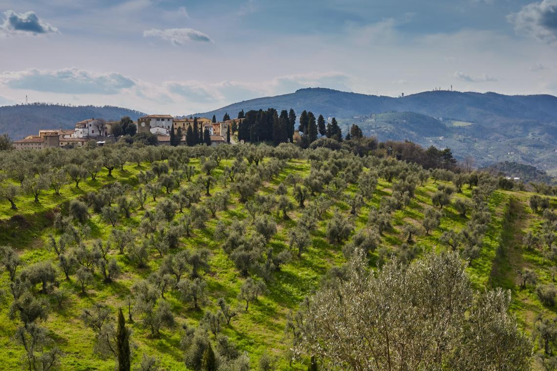 Quale valore attribuiscono i consumatori alle certificazioni sulle etichette dell'olio d'oliva?