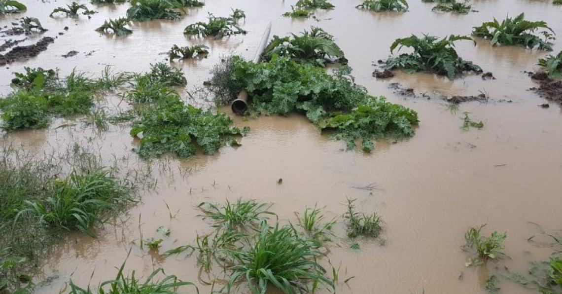 L'alluvione in Sardegna rovinerà i terreni agricoli per anni