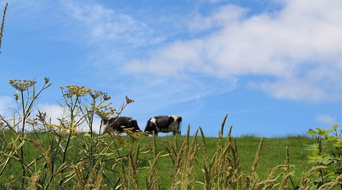 La rivoluzione agricola della Gran Bretagna post Brexit