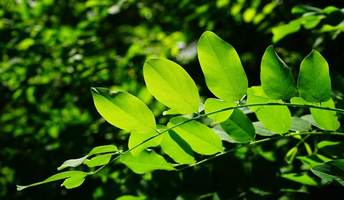 Nuove piante per mitigare il cambiamento climatico