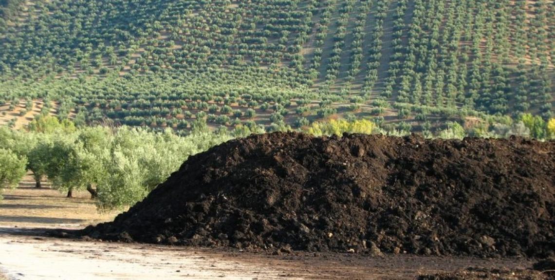 Dalla sansa possibili 600 milioni di euro di nuovo fatturato per il settore oleario