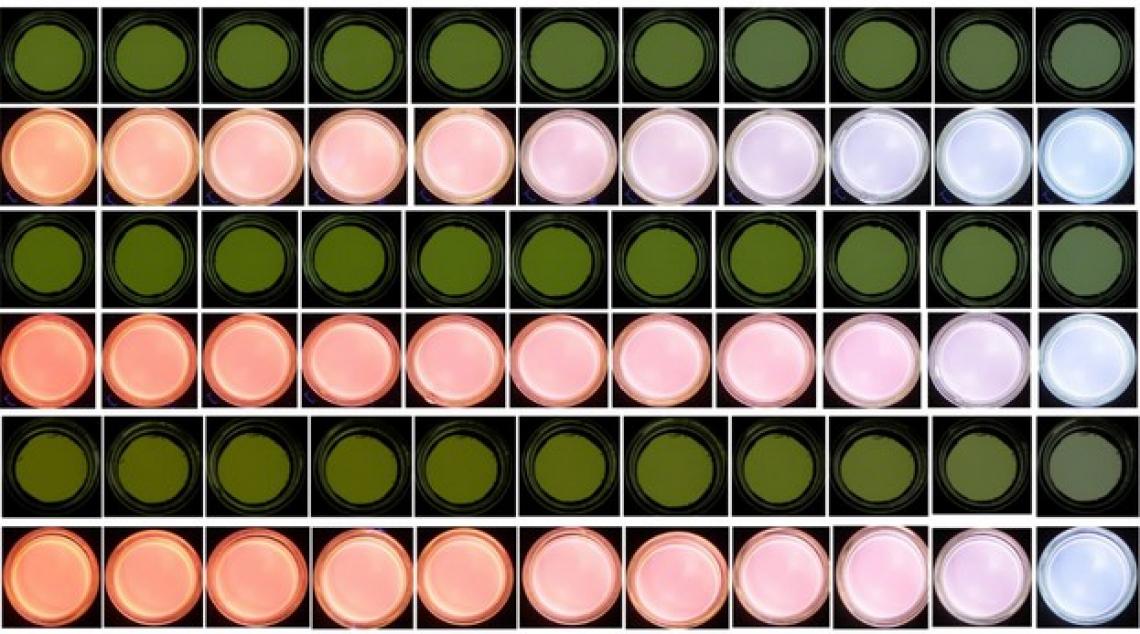 La spettroscopia di fluorescenza frontale e l'imaging di fluorescenza per scoprire le frodi sull'olio extra vergine d'oliva