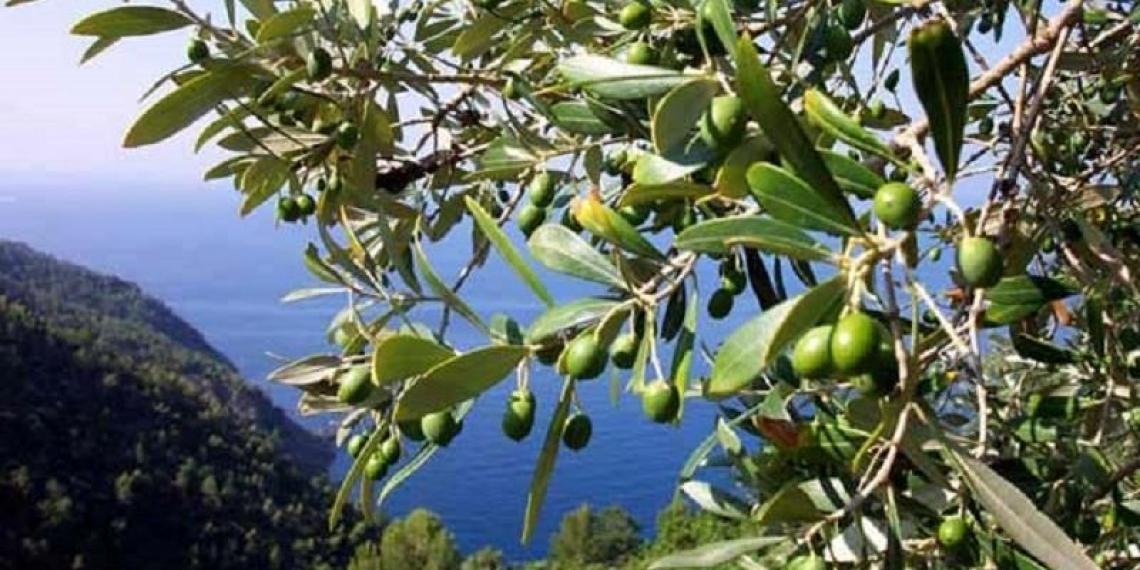 Una nuova organizzazione dei produttori per la Sardegna