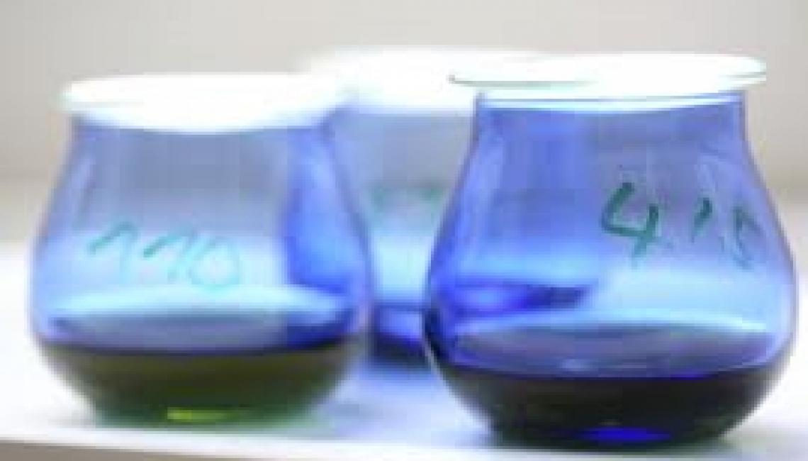 Un naso elettronico per assegnare all'olio d'oliva l'intensità di fruttato