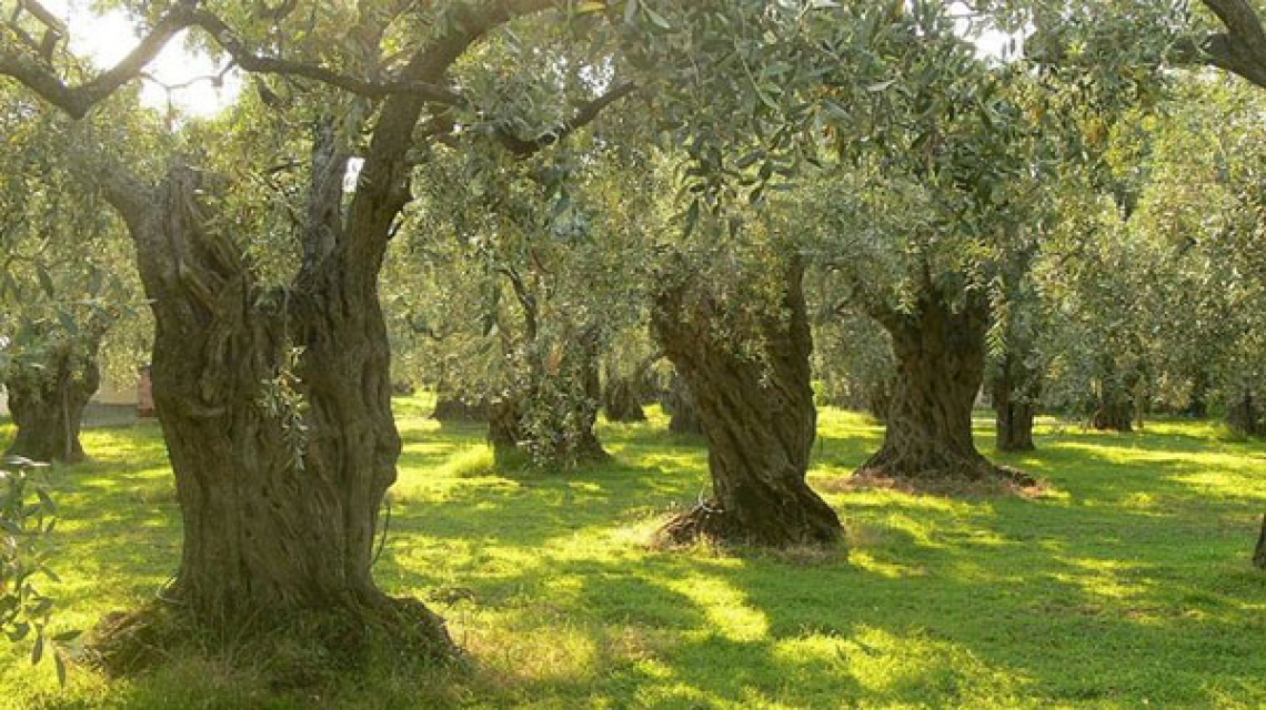 L'olio d'oliva del territorio al centro dell'intesa Città dell'Olio e Lilt