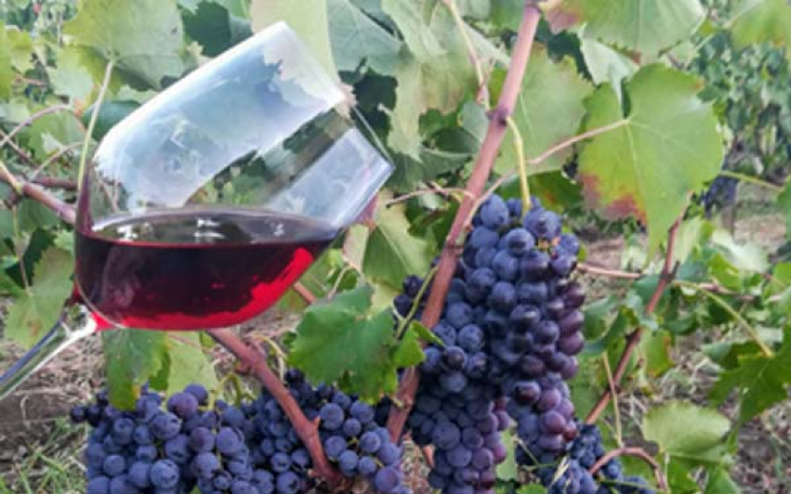 Tutte le misure a sostegno del settore vitivinicolo prorogate di un anno