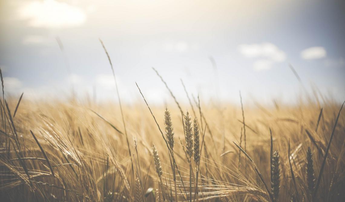 Tutti i benefici della diversificazione delle colture in agricoltura