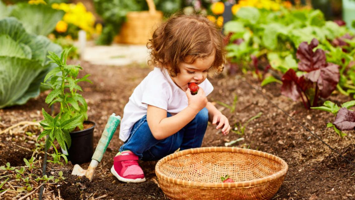 Gli orti scolastici per far mangiare le verdure ai bambini