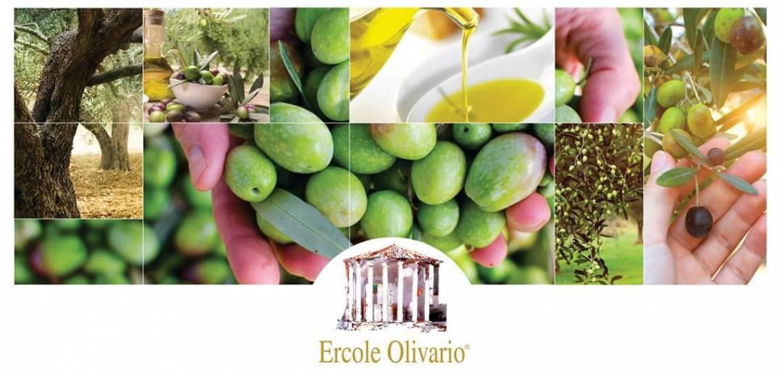Primo appuntamento per l'Ercole Olivario sul turismo dell'olio