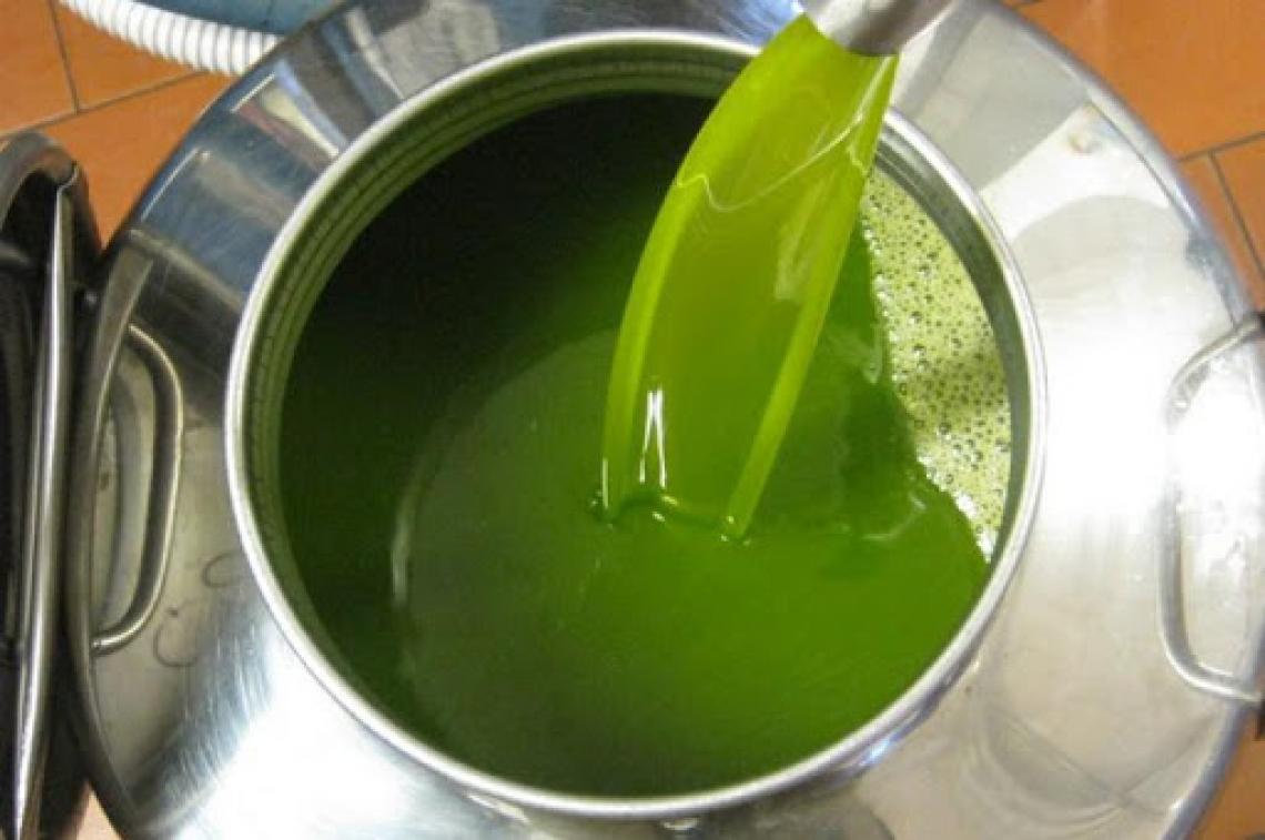 Italia dell'olio d'oliva al terzo posto mondiale per produzione