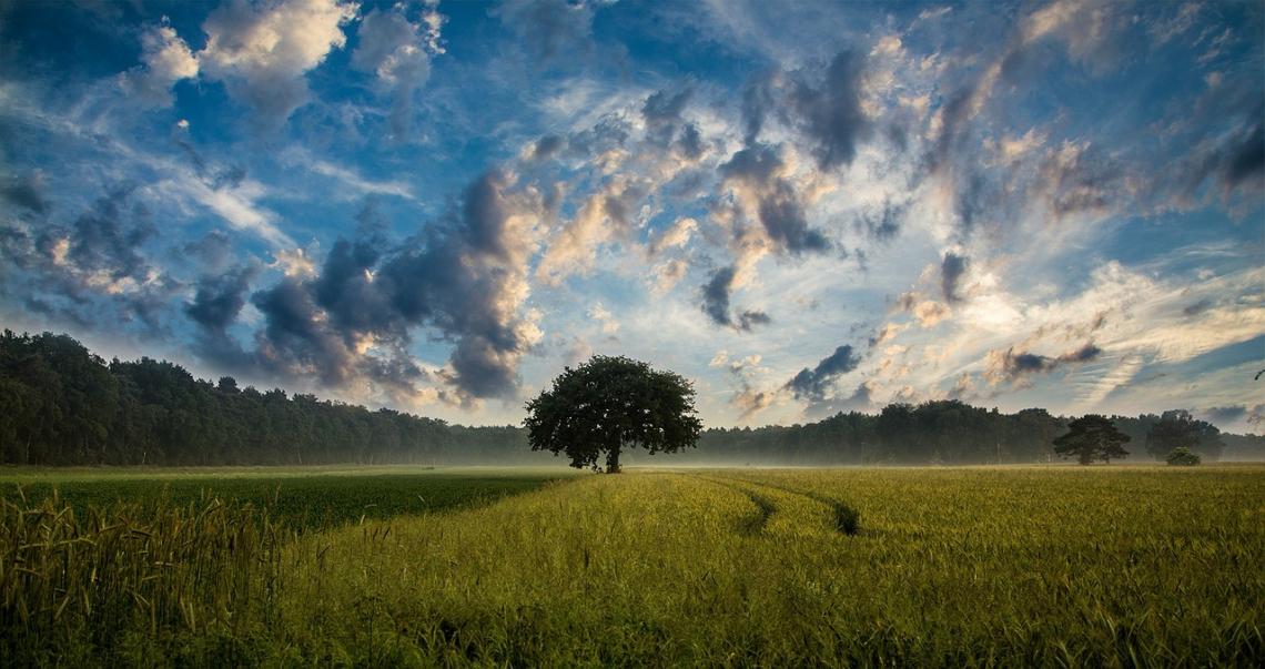 Illuminiamo l'agricoltura:  saperi e paesaggi sono patrimonio del Paese