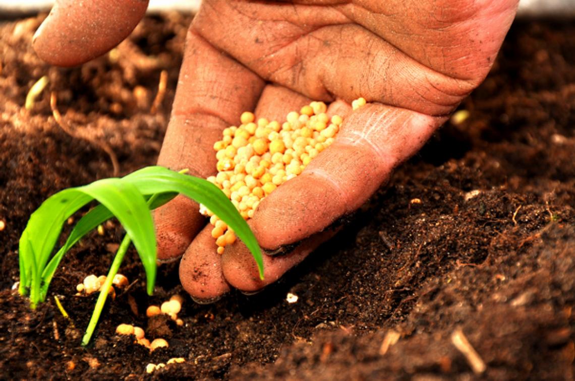Fondi agricoli Feasr 2021-2022: al via il confronto tra Ministero e Regioni
