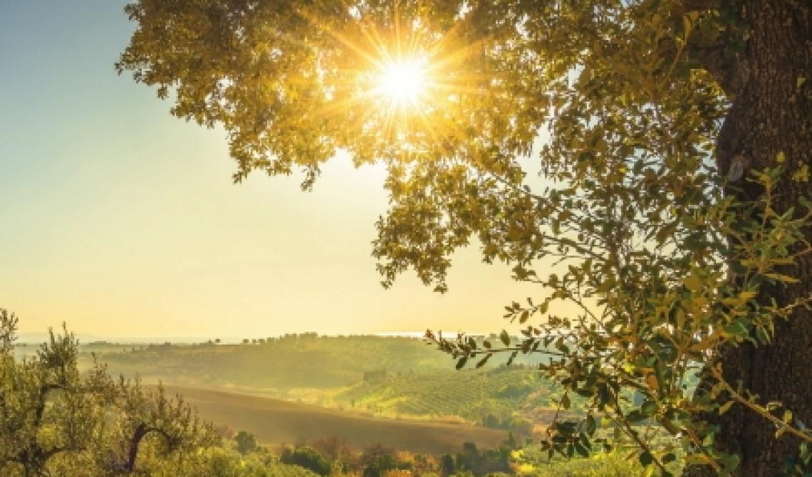 Nuove opportunità e servizi per gli olivicoltori umbri
