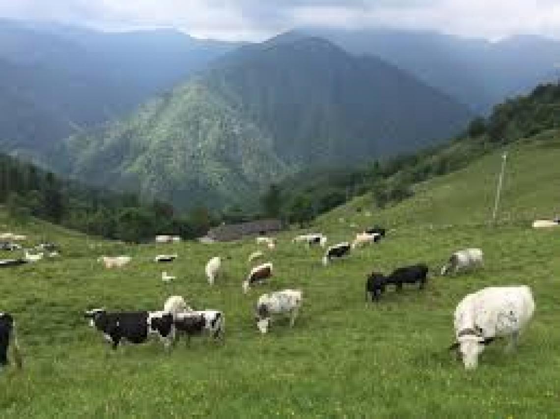Un percorso di saperi, sapori e tradizioni delle Alpi biellesi