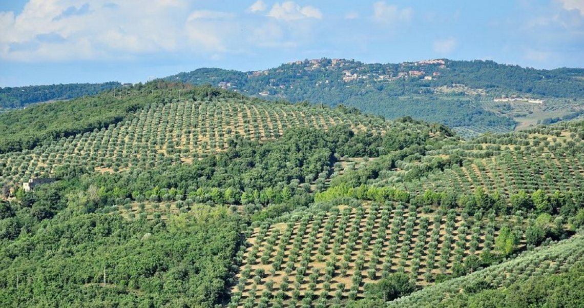Cresce l'offerta per l'oleoturismo di qualità in Umbria dopo l'adesione di due frantoi al circuito delle Strade dell'olio