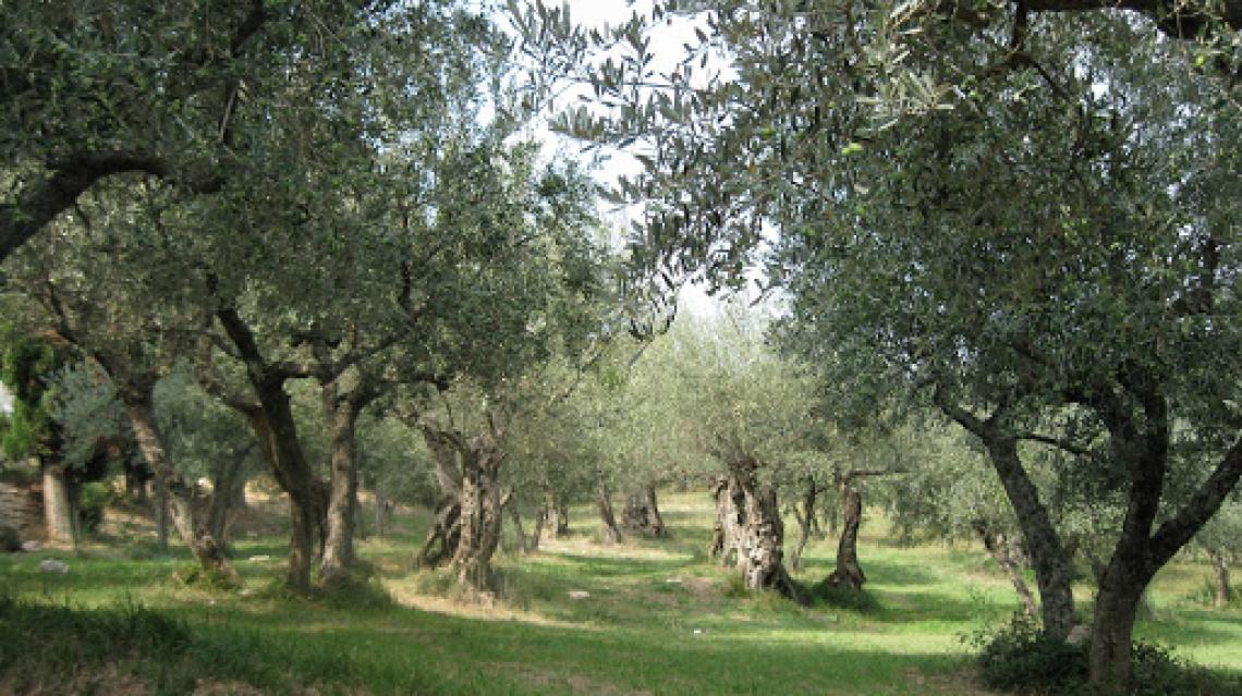 Il mondo dell'olio d'oliva visto da alcune coraggiose imprenditrici in rosa